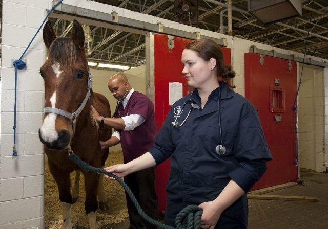 Les métiers de soin des animaux : vétérinaire et soigneur