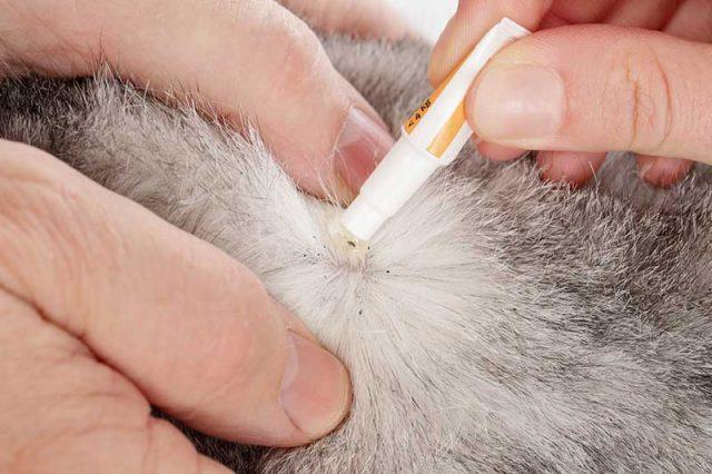 Astuces pour enlever les puces d'un chien