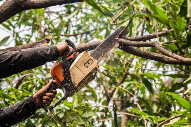 Élagage d'arbre : ce qu'il faut savoir