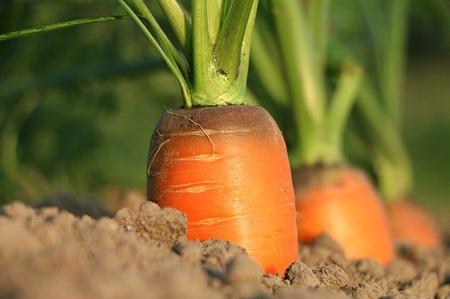 Quelles sont les solutions Medinbio en Agriculture biologique?