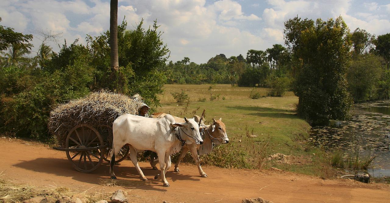 agriculture conventionnelle ce qu'il faut savoir